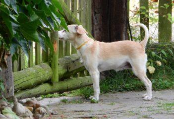 Pastuch elektryczny – dobry sposób na trening dla psa?